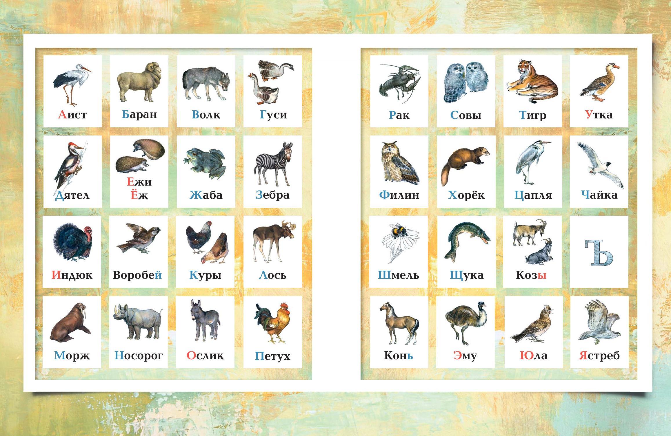 Алфавит животных картинки