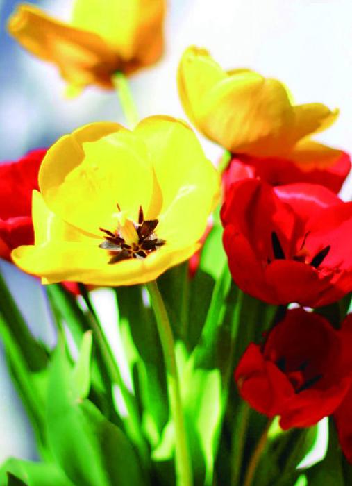 Набор для создания картины со стразами Цветной Тюльпаны, 30 х 40 см. LE023 набор для создания картины из шерсти цветной единорог 20 x 30 см