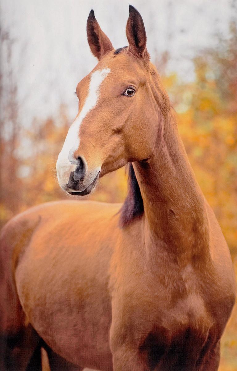 Удивленная лошадь (А5)MS043Блокноты серии Like - это необычный и яркий дизайн, удобный формат и пустые листы внутри, чтобы вы могли записывать важную информацию и зарисовывать не менее важные дела! Отличайся от остальных!