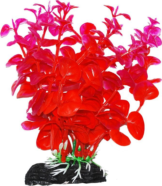 Растение для аквариума Уют Бакопа оранжево-фиолетовая, высота 11 см растение для аквариума уют щитолистник зеленый высота 11 см