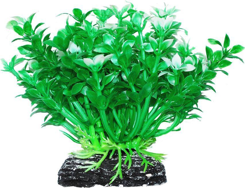 Растение для аквариума Уют Микрантемум зелено-белый, высота 11 см растение для аквариума уют щитолистник зеленый высота 11 см
