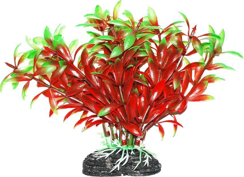 Растение для аквариума Уют Людвигия красно-зеленая, высота 11 см растение для аквариума уют щитолистник зеленый высота 11 см