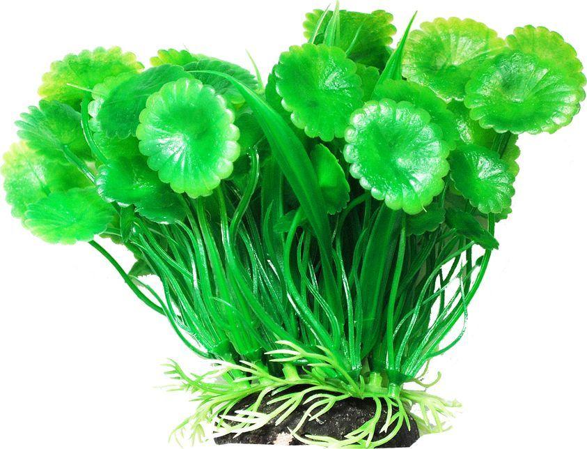 Растение для аквариума Уют Щитолистник с осотом, высота 12 см растение для аквариума уют щитолистник зеленый высота 11 см