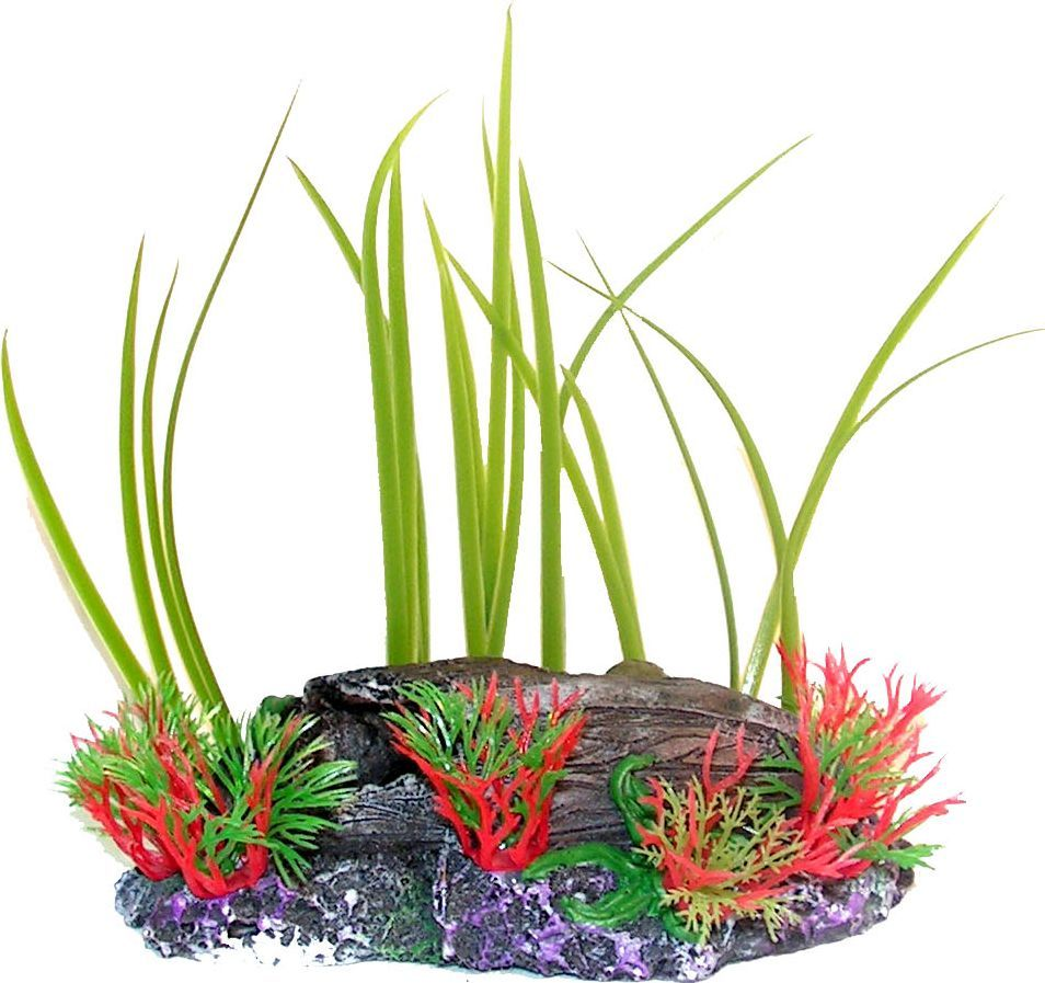 вижу картинки растения для аквариумов массу трудов этой