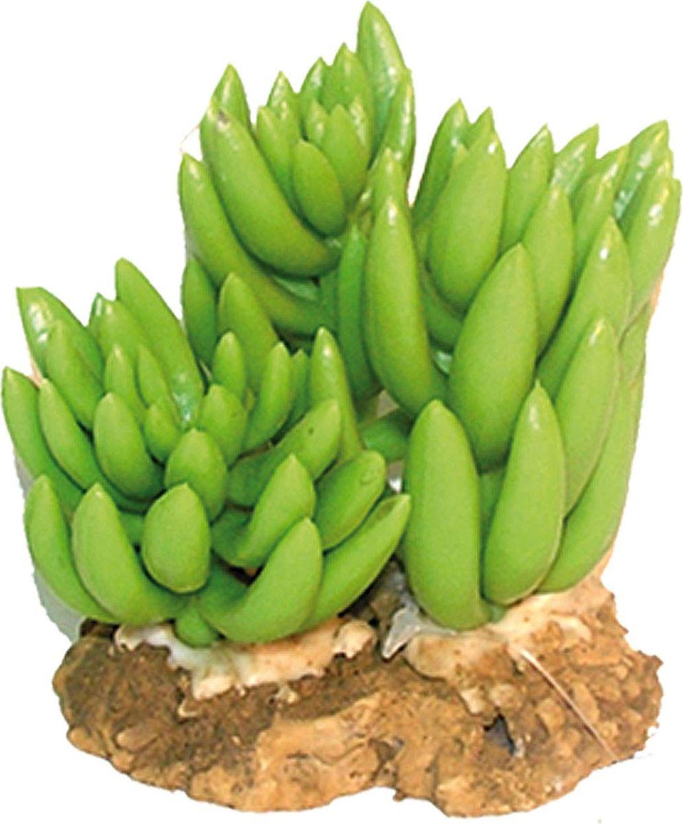 Растение для аквариума №1 Кактус - три цветка, высота 9 см