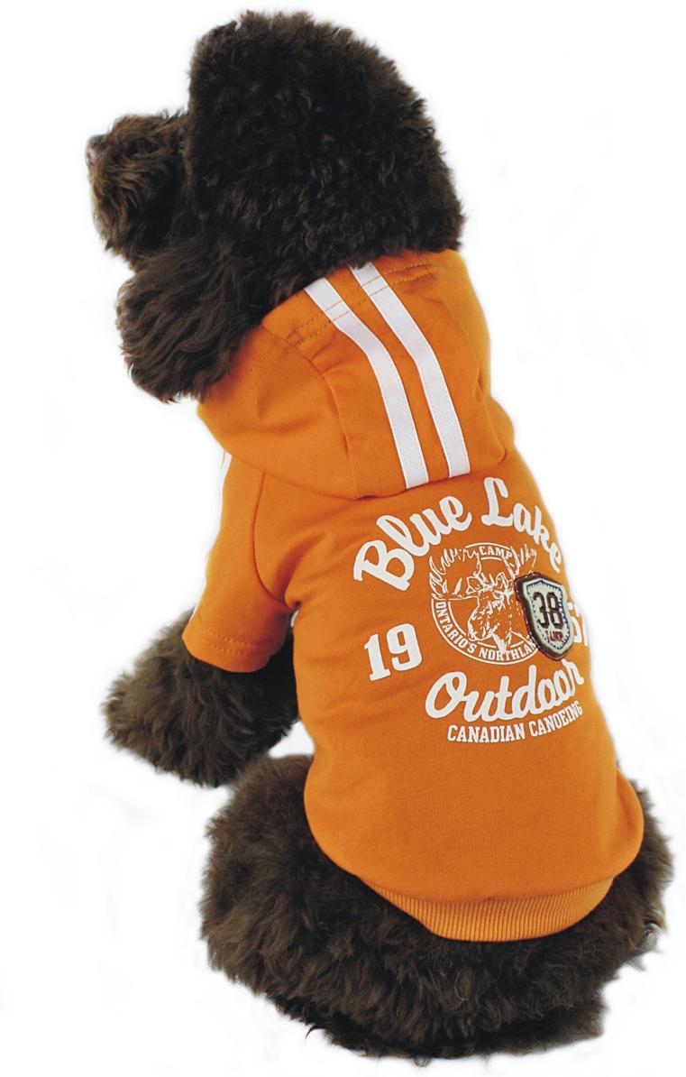 Майка-толстовка для собак Dobaz, утепленная, цвет: оранжевый. ДГ1103БХХЛ. Размер XXL майка для собак dobaz паровозик унисекс цвет темно зеленый оранжевый да025бххл размер xxl
