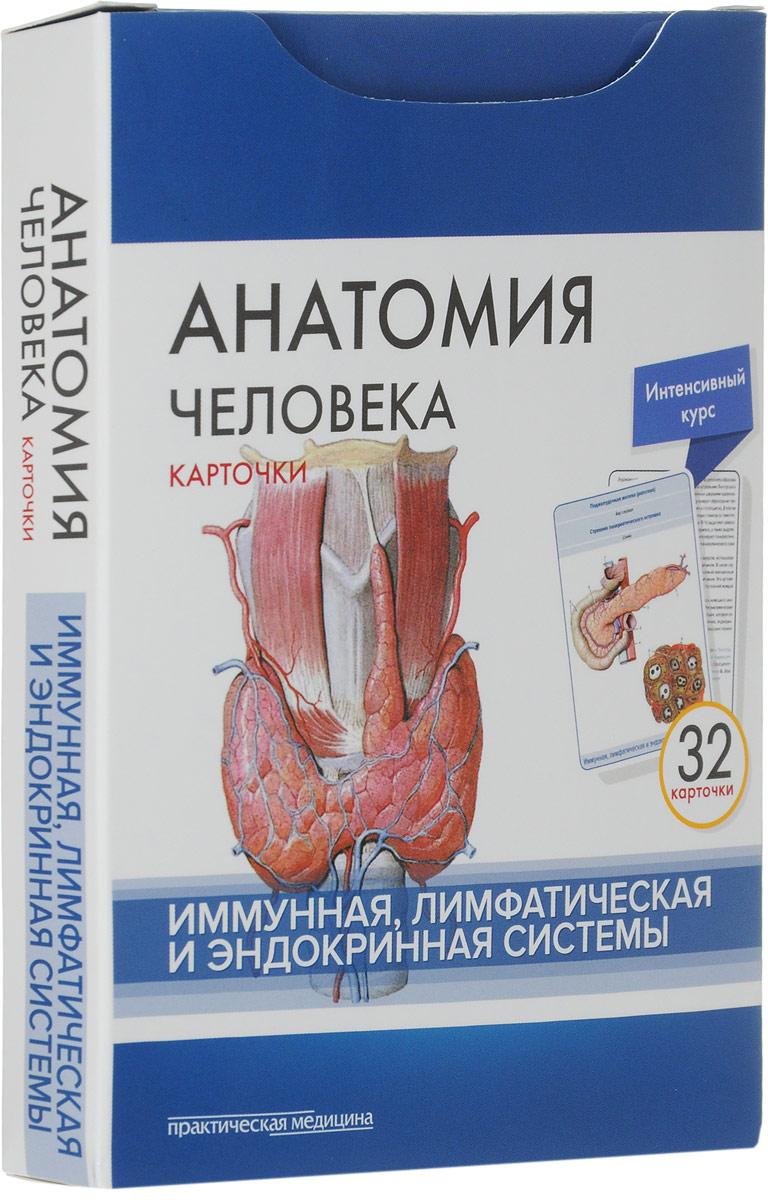 М. Р. Сапин, В. Н. Николенко, М. О. Тимофеева Анатомия человека. Иммунная, лимфатическая и эндокринная системы (набор из 32 карточек) сапин м николенко в тимофеева м анатомия человека иммунная лимфатическая и эндокринная система 32 карточки