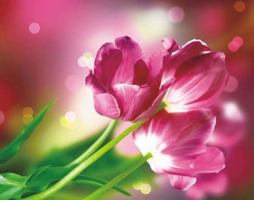 Набор для создания картины со стразами Цветной Тюльпаны Каравелла, 40 х 50 см. LGP010 набор для создания картины из шерсти цветной единорог 20 x 30 см