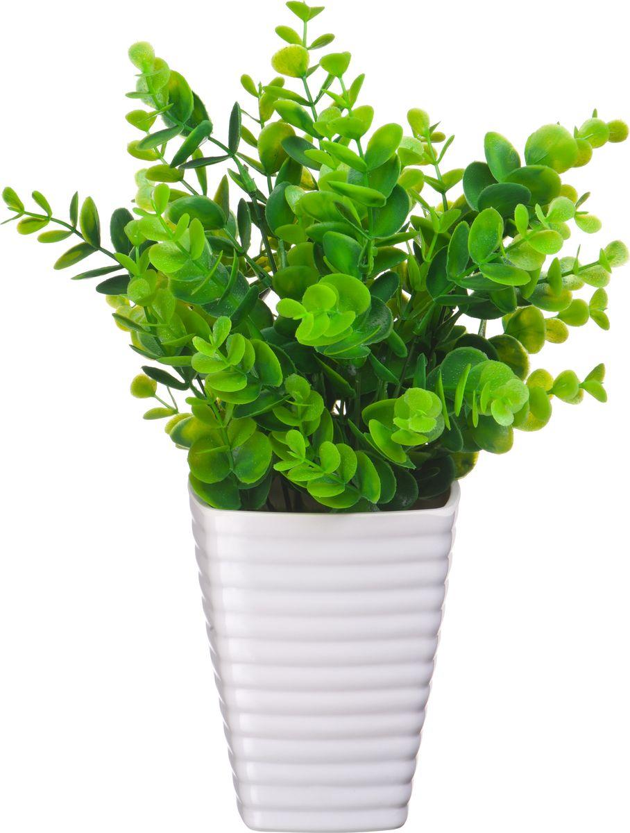 Композиция цветочная Engard Солейролия, в кашпо, 17 х 20 см растение искусственное кашпо подвесное роза d 13 см в ассортименте