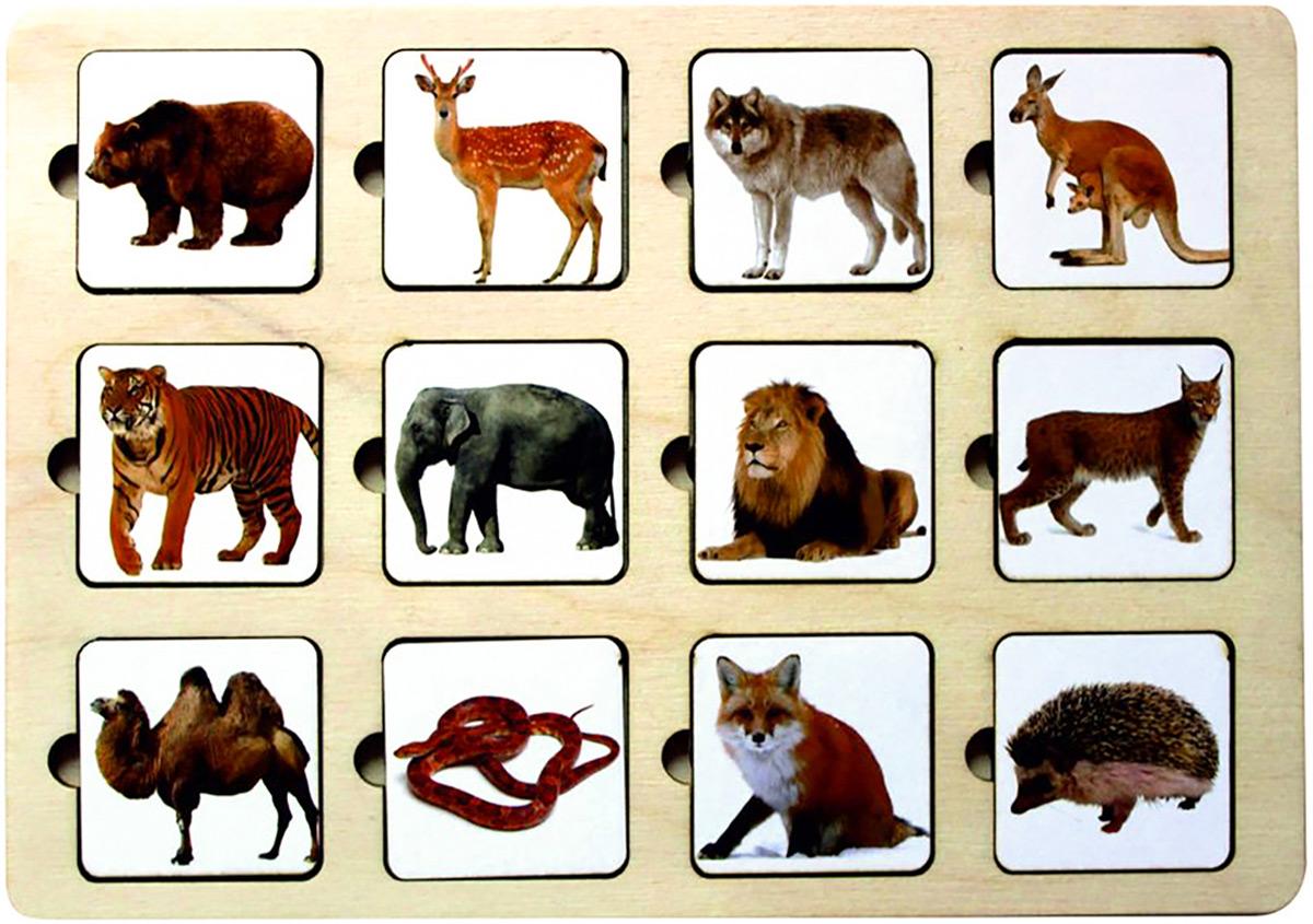 Smile Decor Обучающая игра Секретики Зоопарк все цены