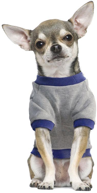 """Толстовка для собак TriolDisney """"Minnie College"""", цвет: серый, синий. Размер S"""