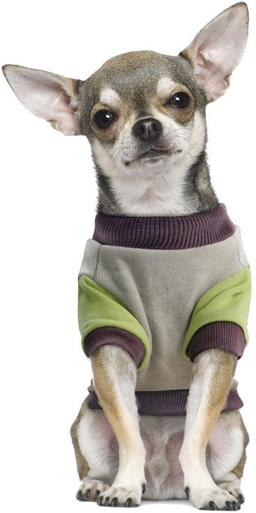 "Толстовка для собак TriolDisney ""Pluto College"", цвет: серый, зеленый. Размер M"