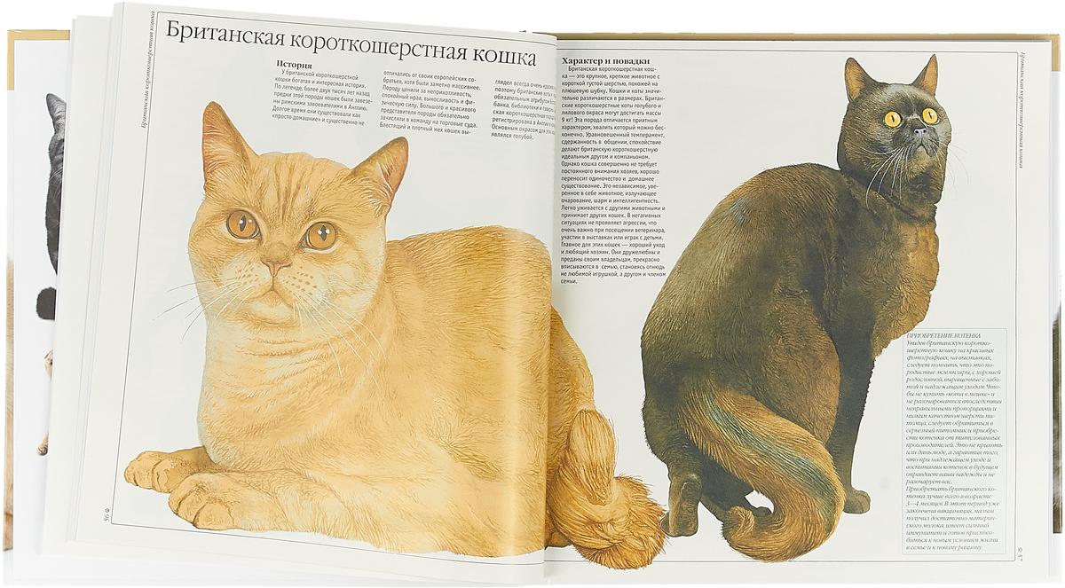 атлас пород кошек с фотографиями задачей