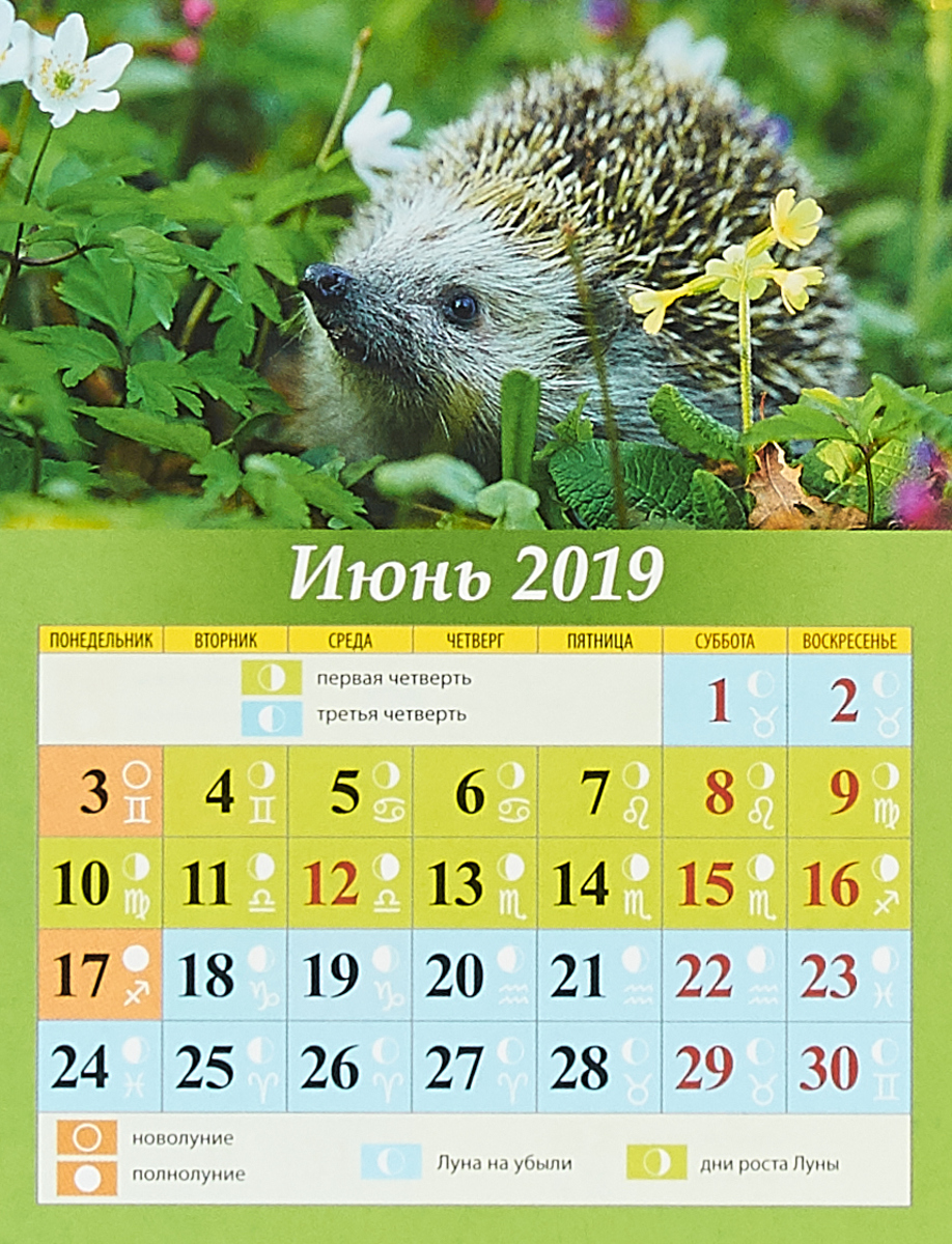 Календарь 2019 (на магните). Лунный календарь с фазами луны