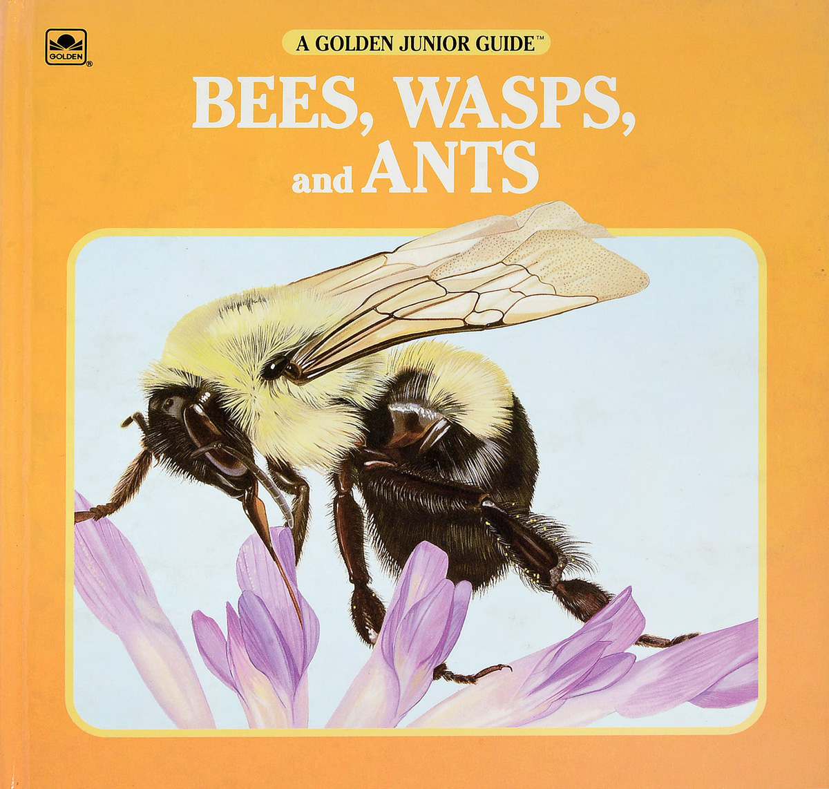 George S. Fichter Bees, Wasps and Ants