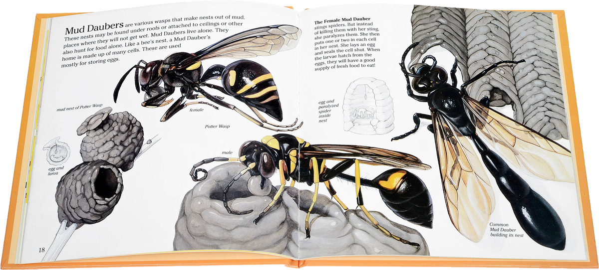George S. Fichter. Bees, Wasps and Ants
