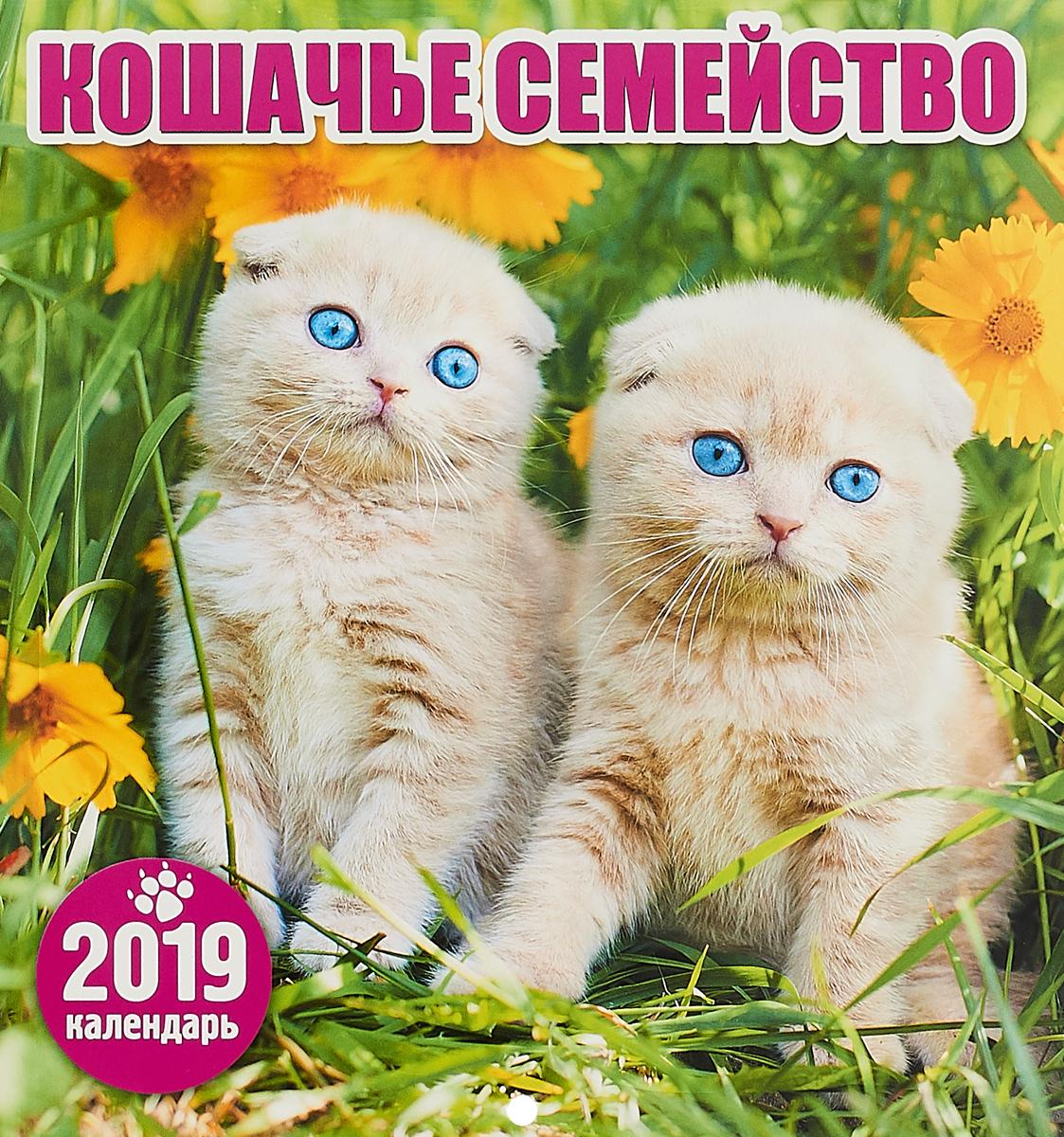 Календарь перекидной на 2019 год. Кошачье семейство календарь перекидной на 2019 год кошачье семейство