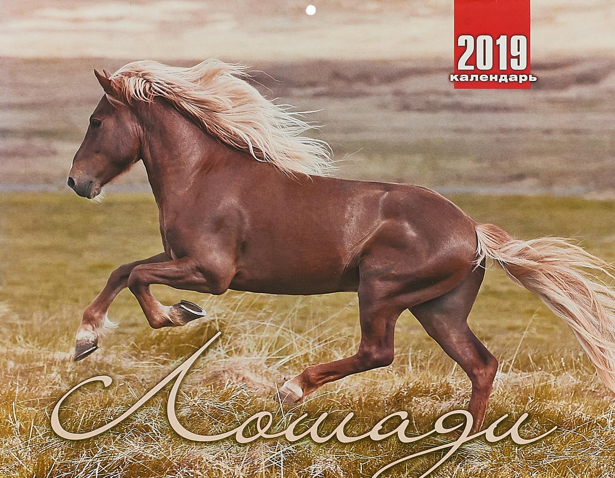 Календарь перекидной на 2019 год. Лошади календарь перекидной на 2019 год кошачье счастье