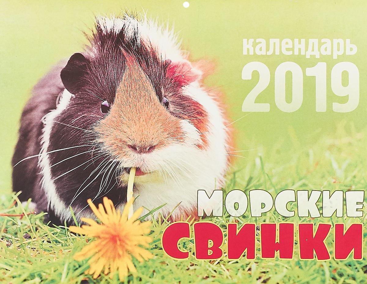 Календарь перекидной на 2019 год. Морские свинки цены