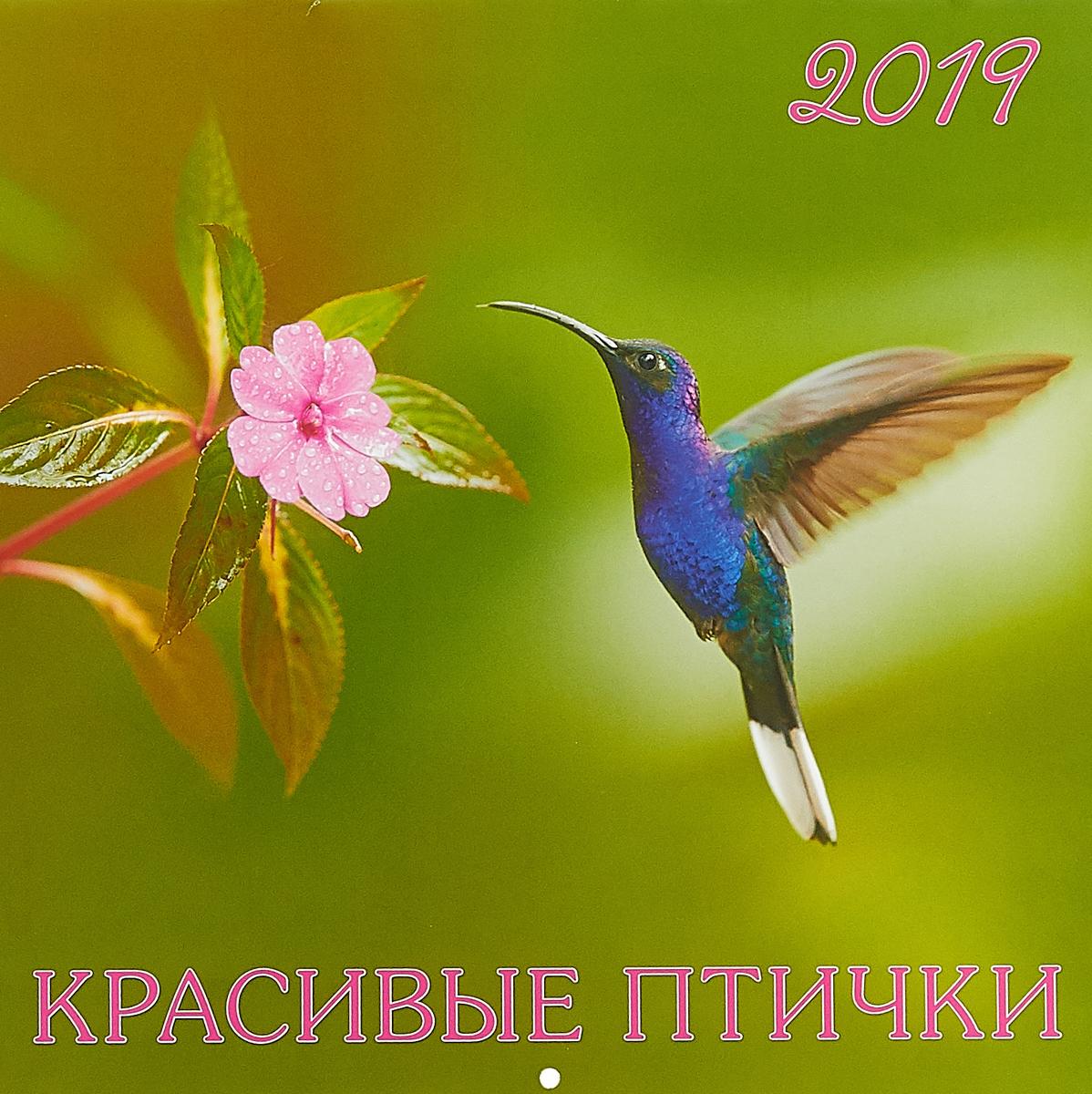 Календарь 2019 (на скрепке). Красивые птички тетрадь на скрепке printio птички