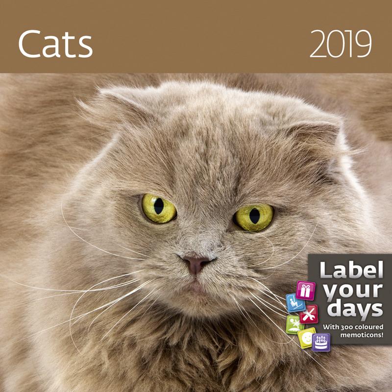 Календарь-органайзер 2019. Cats / Кошки577GJ11Кошка – животное таинственное и мистическое. Вряд ли кто-то, хоть раз, заглянувший в глубину желто-зеленых кошачьих глаз, с этим поспорит. Еще в Древнем Египте было принято считать кошку волшебным животным. В Азии по сию пору ценят целебные качества кошек, причем считается, что, чем старше животное, тем сильнее его мистические свойства. Даже керамическая статуэтка кошки способна охранять домашний очаг от злых духов, уверены китайцы