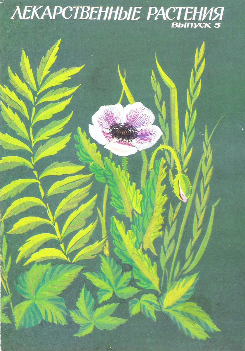 Картинках, открытки лекарственные растения