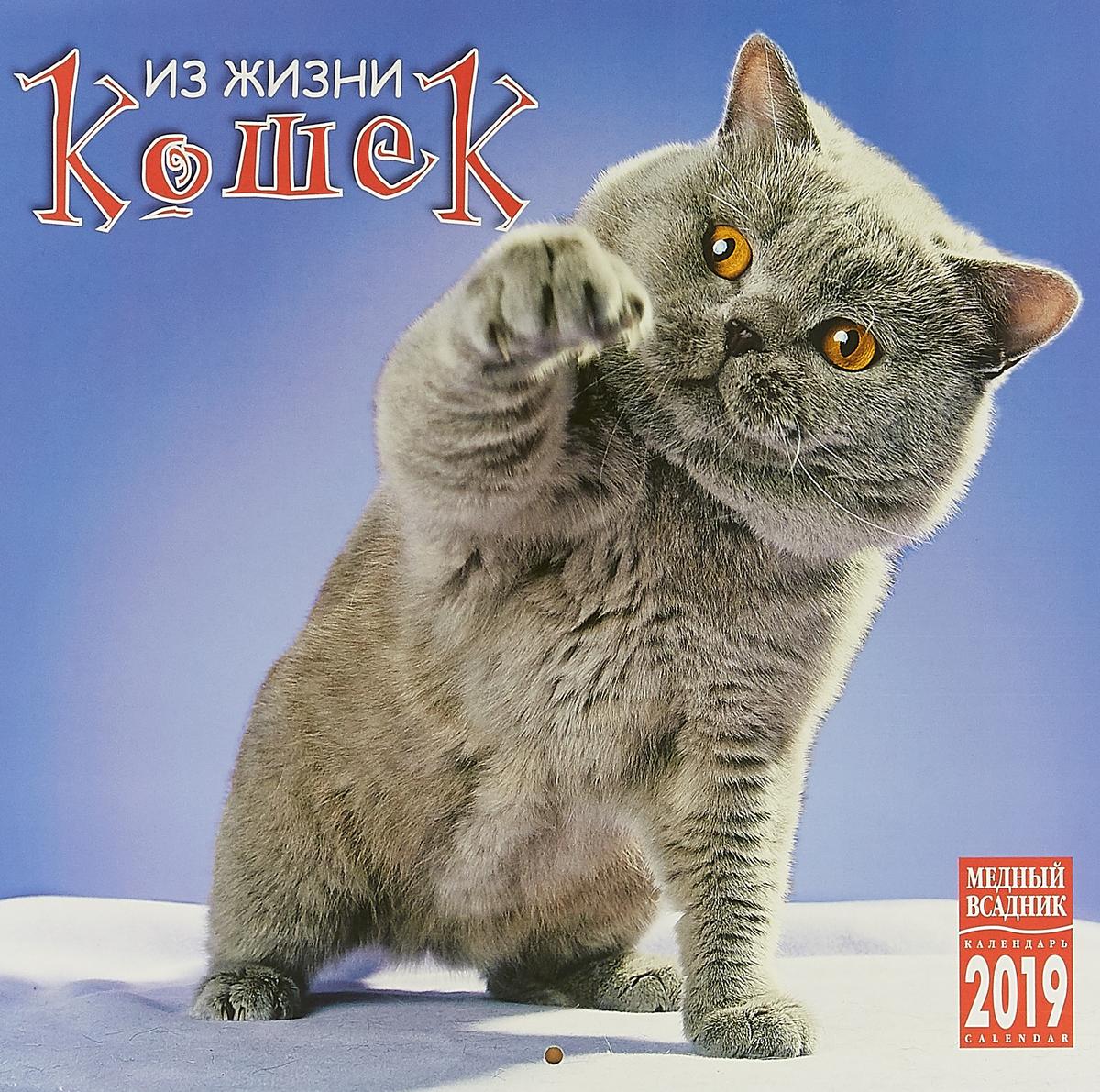 Календарь на скрепке на 2019 год. Из жизни кошек календарь животных по годам