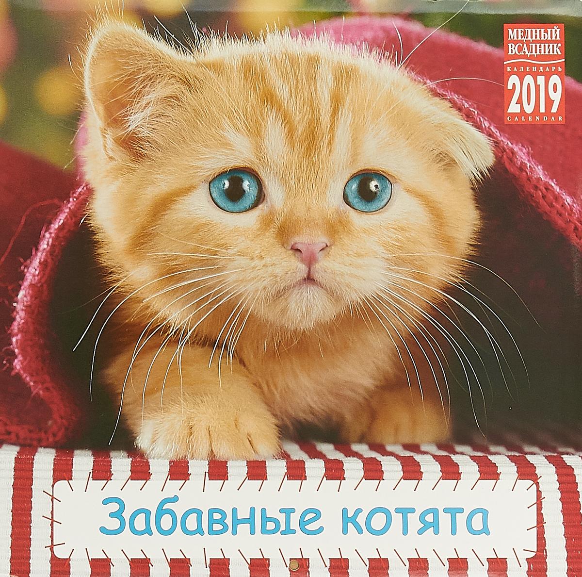купить Календарь на скрепке на 2019 год. Забавные котята по цене 93 рублей