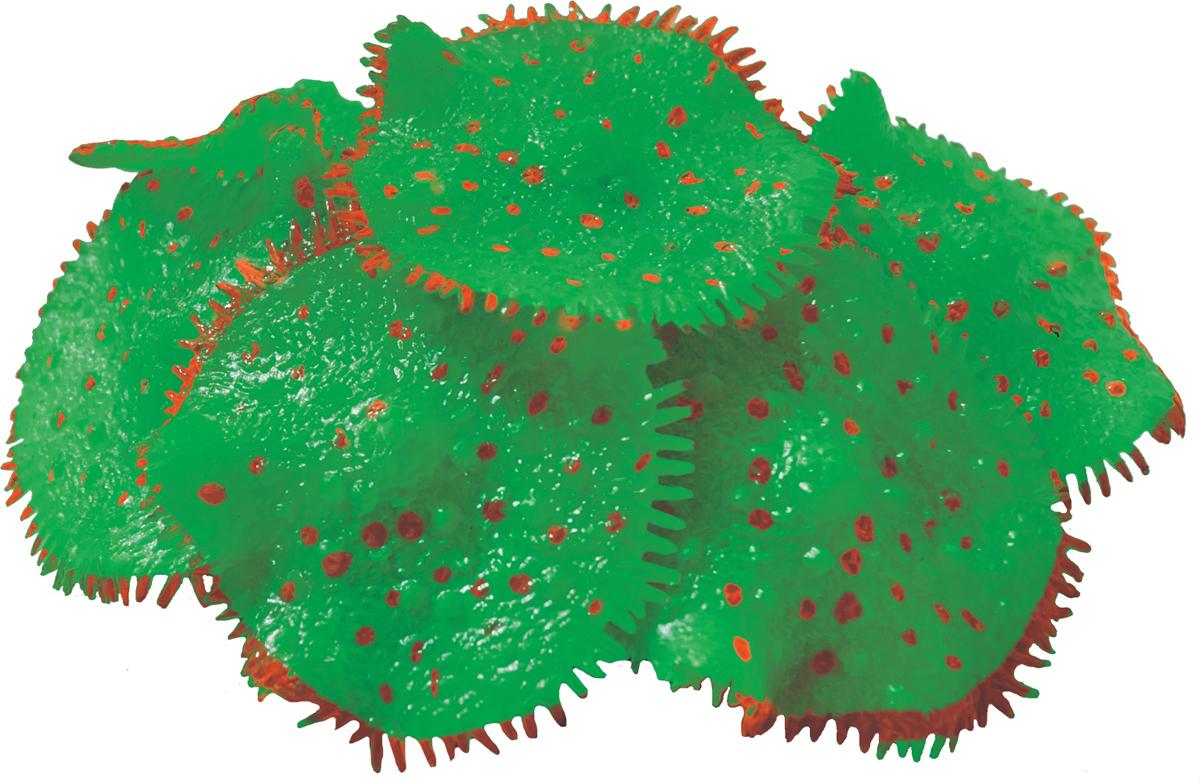 Декорация для аквариума Jelly-Fish Коралл Ковровая Актиния, светящаяся, цвет: зеленый, диаметр 10 см1303Коралл не выцветает и не разрушается с течением времени. При необходимости можно чистить жесткой щеткой. Абсолютно безвредны для рыб, беспозвоночных и растений. Устойчивы к истиранию краски. Подходят для пресноводного и морского аквариумов.