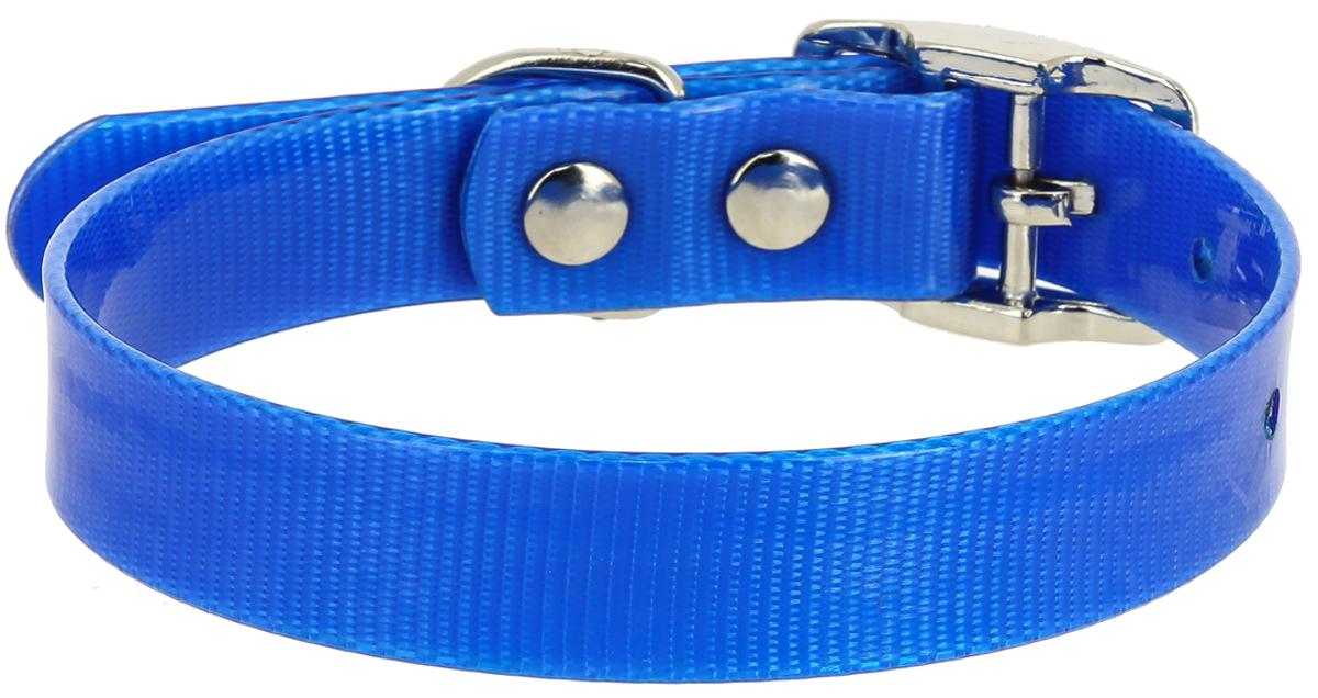 Ошейник для собак Каскад, цвет: синий, ширина 12 мм, обхват шеи 20-24 см