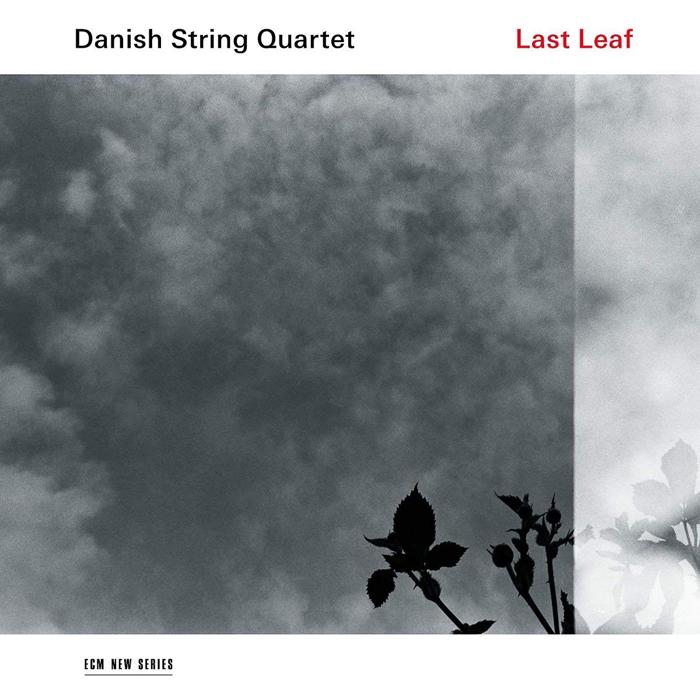 Danish String Quartet Danish String Quartet. Last Leaf (LP) серьги by song quartet 3022