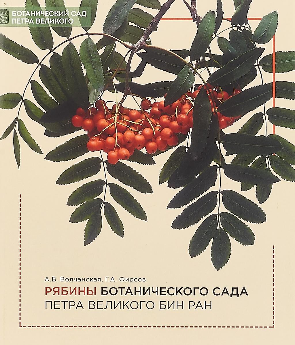 А В. Волчанская, Г. А. Фирсов Рябины Ботанического сада Петра Великого