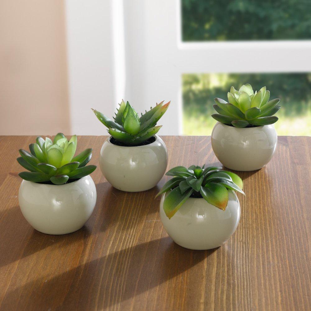 Фото - Набор декоративных растений Хит-декорМини, в горшочках, 4 шт растения