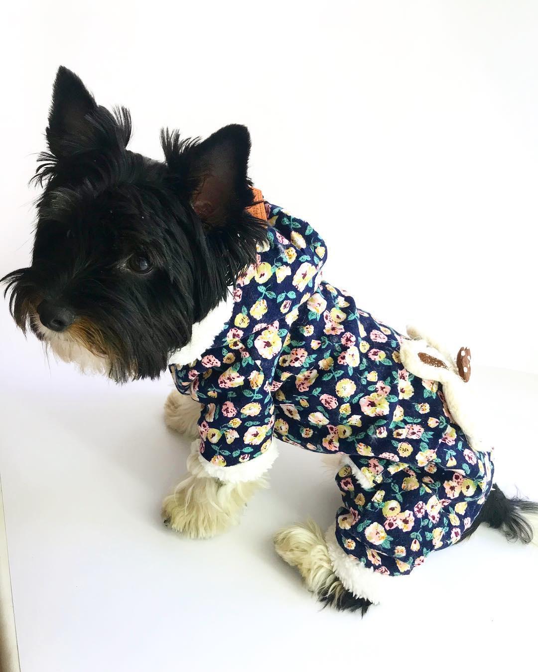 """Демисезонный комбинезон для собак """"Зайка"""", синий, размер 10 (22 см)"""
