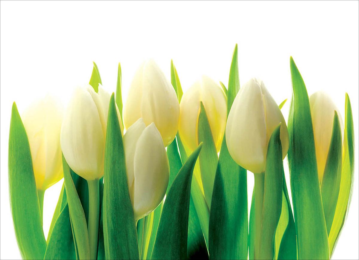 Фотообои Postermarket Тюльпаны, 254 x 184 см фотообои флизелиновые московская обойная фабрика озеро в горах 200 х 270 см
