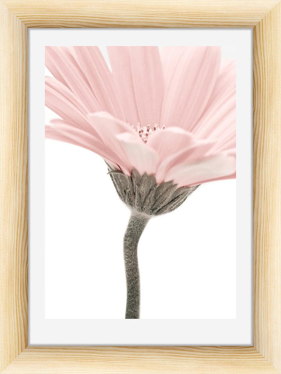Картина Postermarket Маргаритка, 30 х 40 см картина postermarket морской конек 40 х 40 см