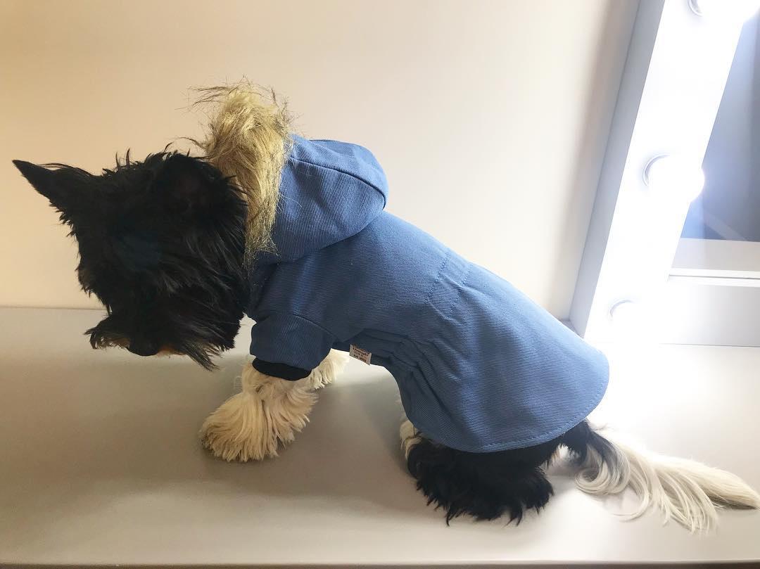 """Куртка для собак Arnydog.ru """"Парка"""", XQ-10_xs, размер XS (18 см)"""
