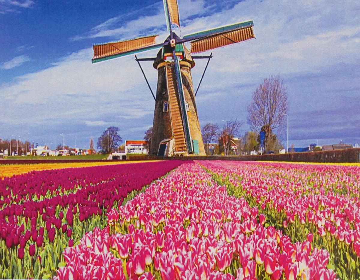 Картина по номерам Школа талантов Голландия, 3462722, 30 х 40 см картина по номерам школа талантов зимний дом 1675811 30 х 40 см