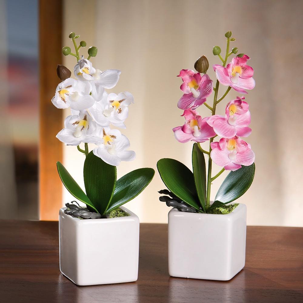 всех орхидеи фото красивые картинки в горшках популярные