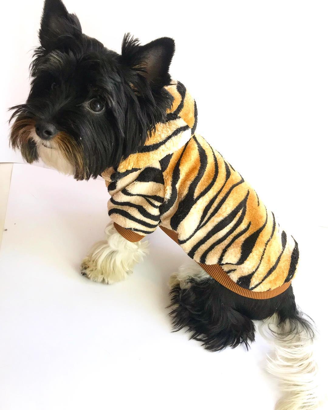 """Карнавальная толстовка для собак """"Тигр"""", размер XXL (38 см)"""