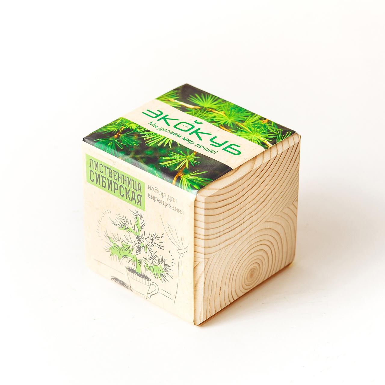 Набор для выращивания Экокуб Лиственница сибирская набор для опытов и экспериментов набор для выращивания экокуб базилик