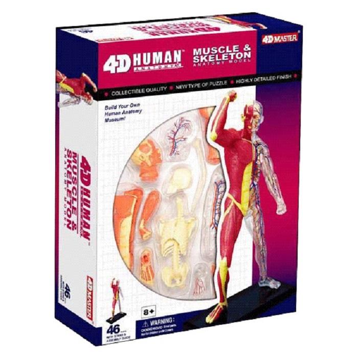 лучшая цена Набор для опытов 4D Master Объемная анатомическая модель Скелет человека с мышцами