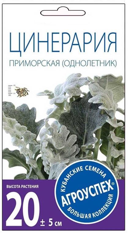 Семена Агроуспех Цинерария Приморская О, 33311, 0,1 г завойчинская м в приморская академия или ты просто пока не привык