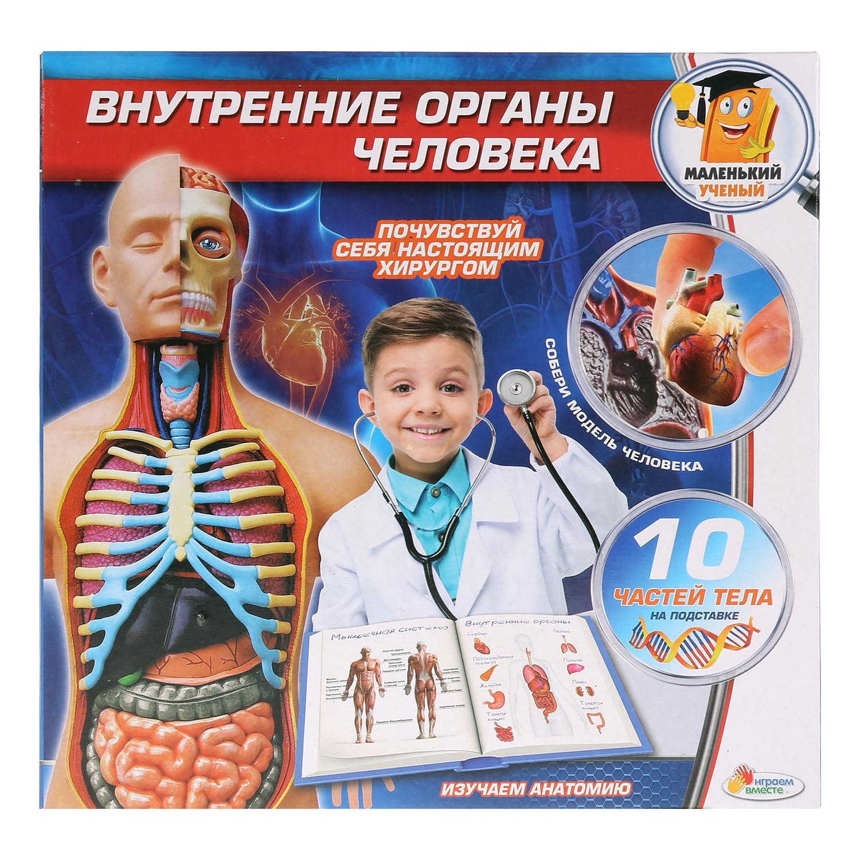 Опыты Играем вместе: Внутренние органы человека