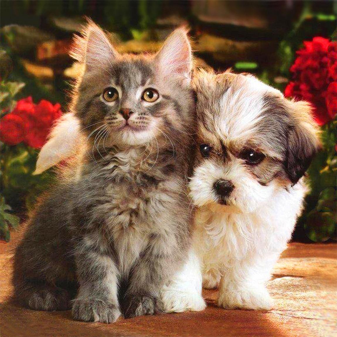 Картинки котят с щенками