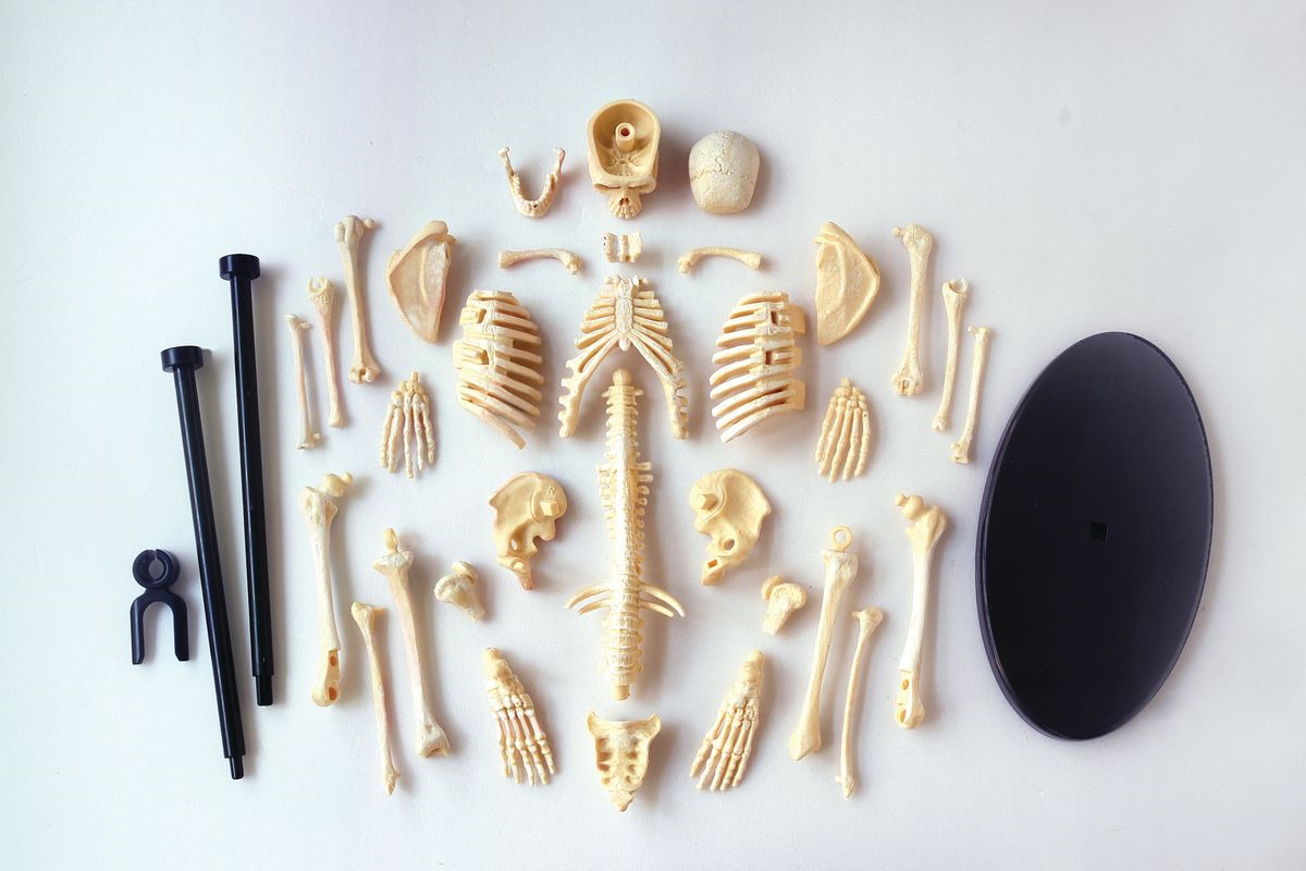 Набор для опытов и экспериментов Edu-Toys Education Анатомический набор: скелет, SK057, разноцветный наборы для творчества edu toys творческий набор динозавр