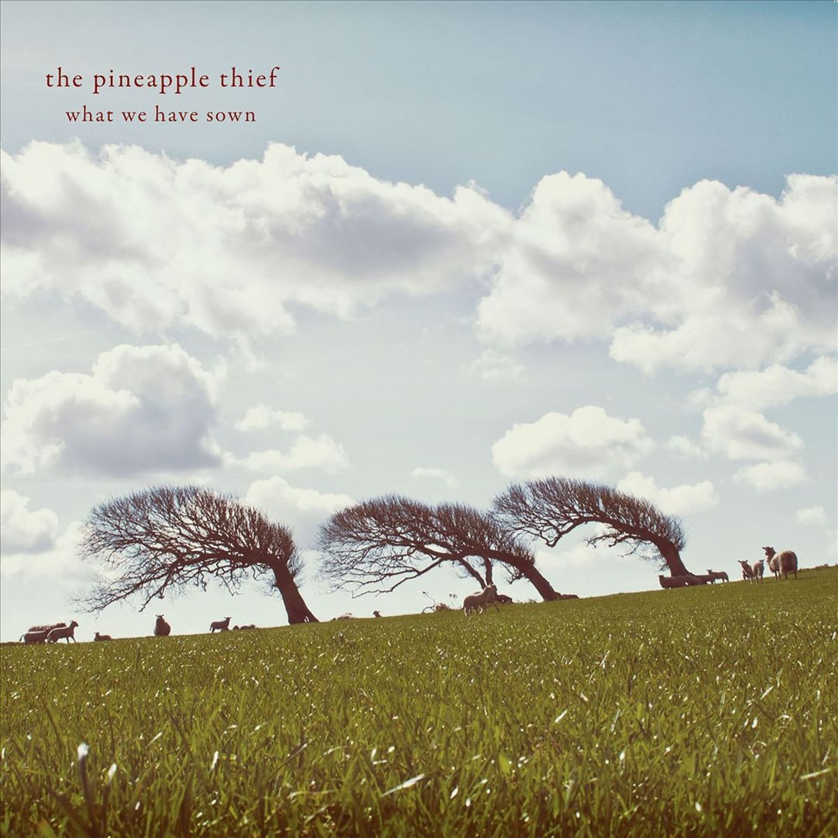 The Pineapple Thief The Pineapple Thief. What We Have Sown