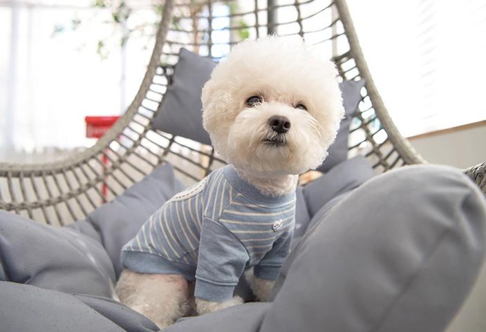 "Футболка для собак Pinkaholic (Южная Корея) ""AVIANA"", голубая, M"