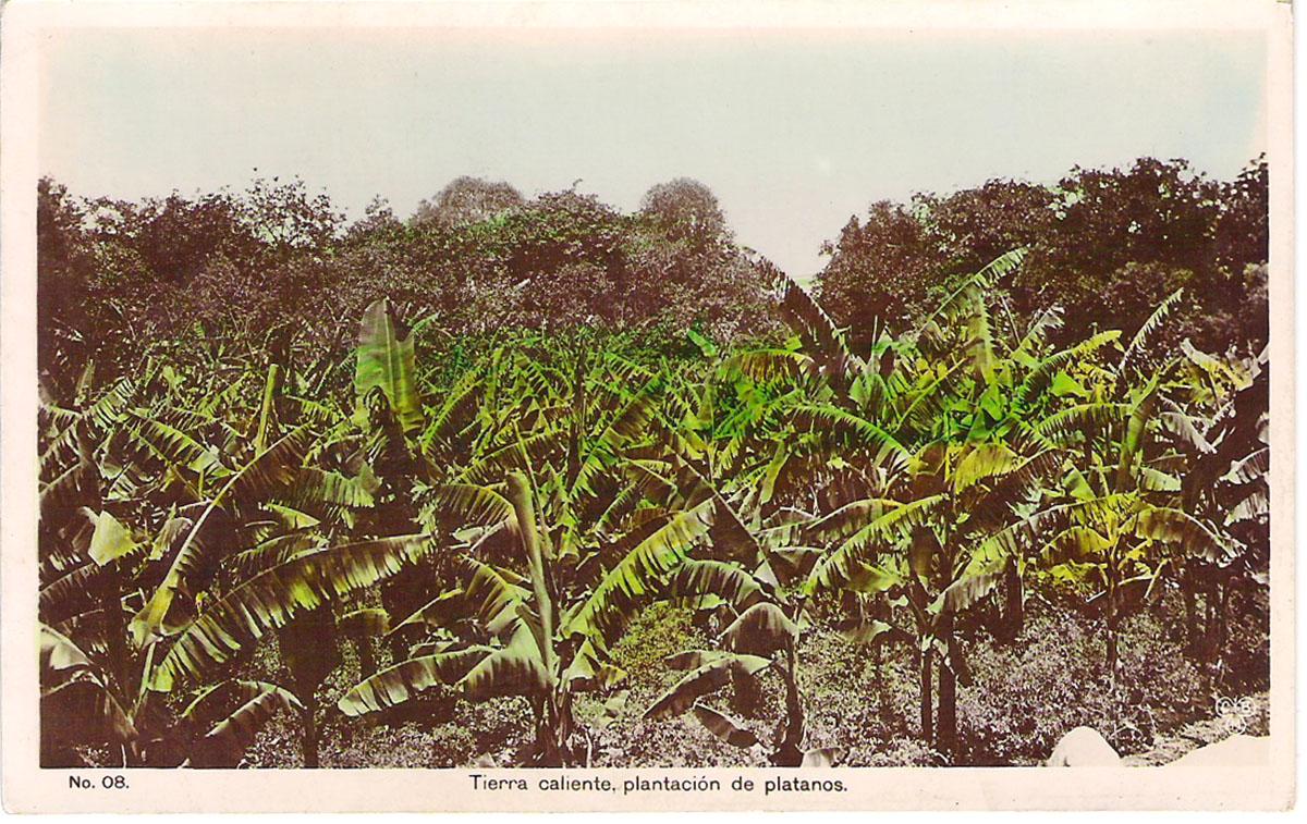 Почтовая открытка Tierra caliente, plantacion de platanos. Мексика, начало ХХ века почтовая открытка palacio nacional 15 мексика начало хх века