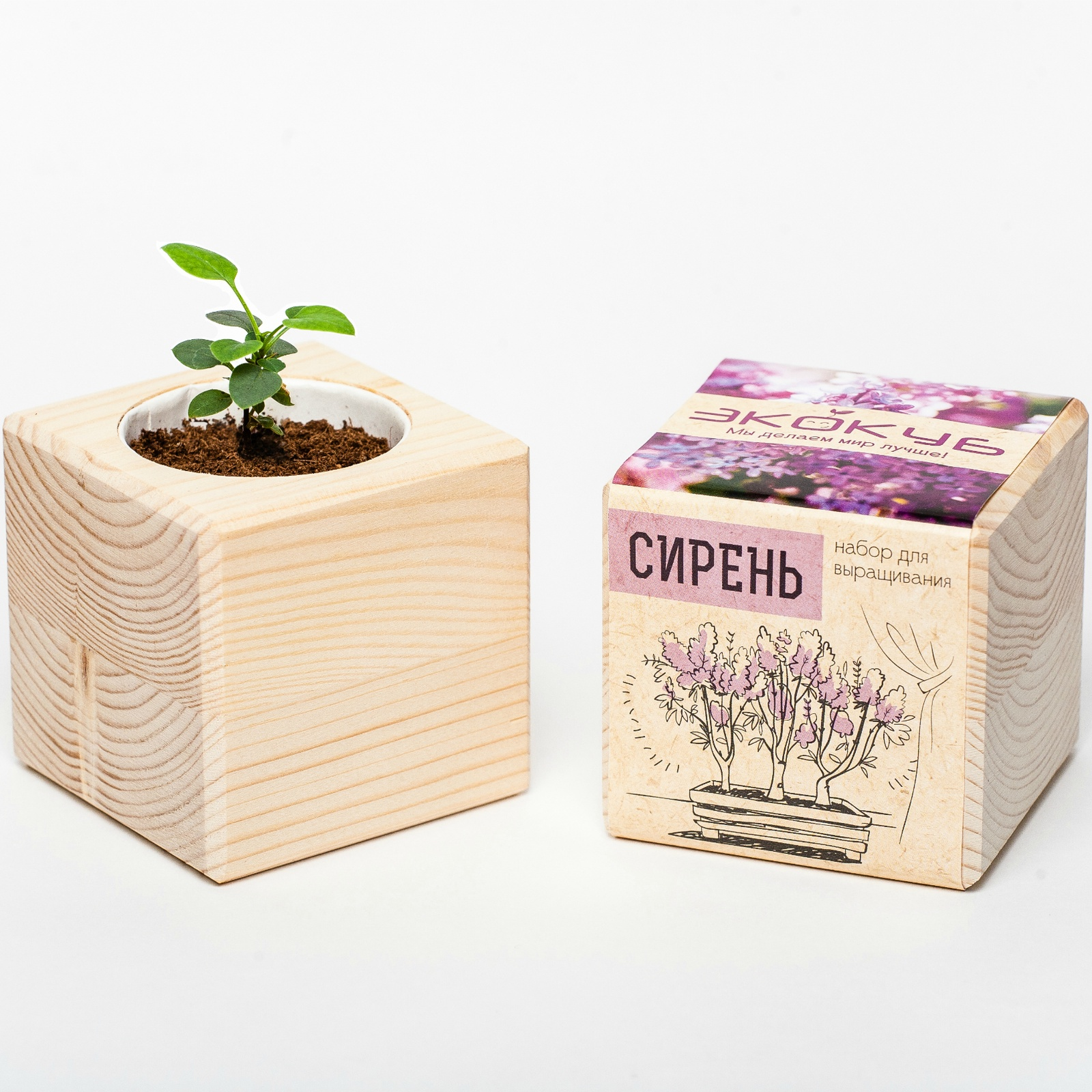 Сувенирный набор ЭЙФОРД Набор для выращивания Экокуб Сирень Венгерская, ECB-01-06, светло-бежевый именной набор для выращивания свадебного дерева